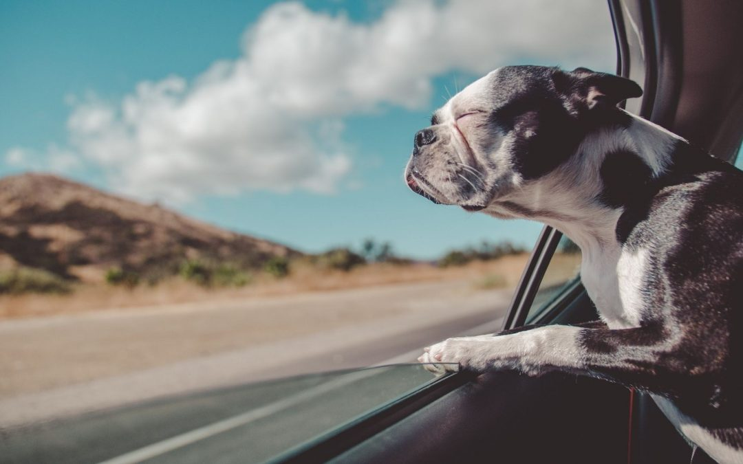 En voyage avec son chien