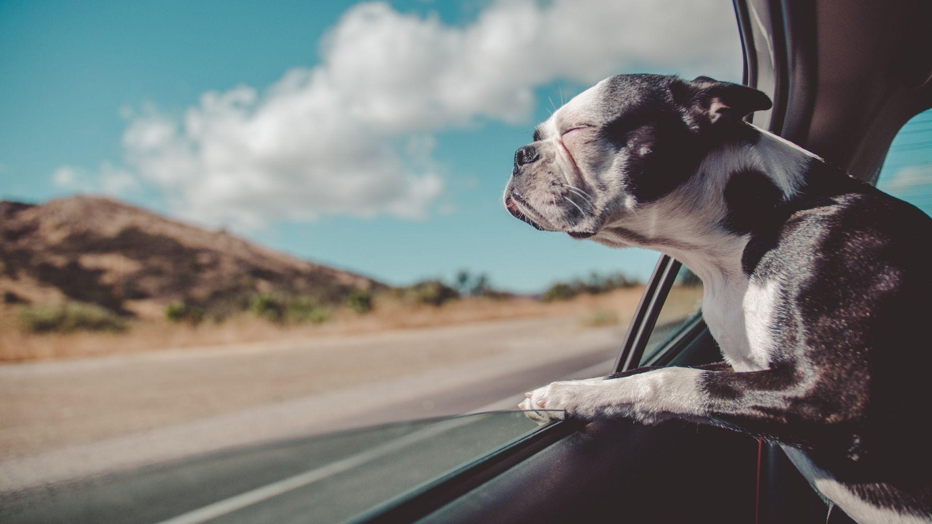 voyage avec son chien